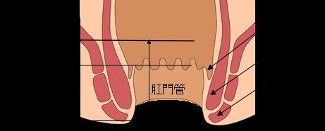 肛門の構造